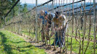 landwirtschaftliche Bearbeitung der eigenen Pflanzen